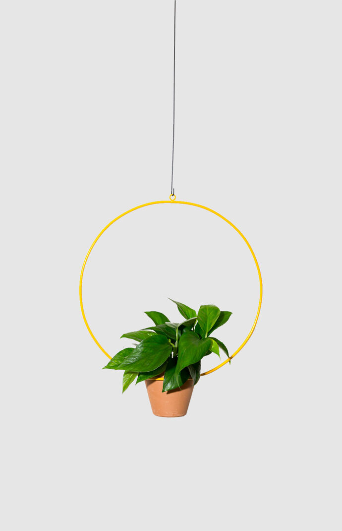 Yellow Hanging Circle Planter